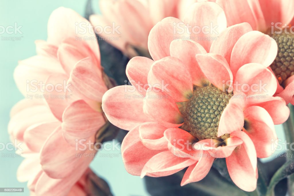 lovely pale pink flowers in vintage style stock photo