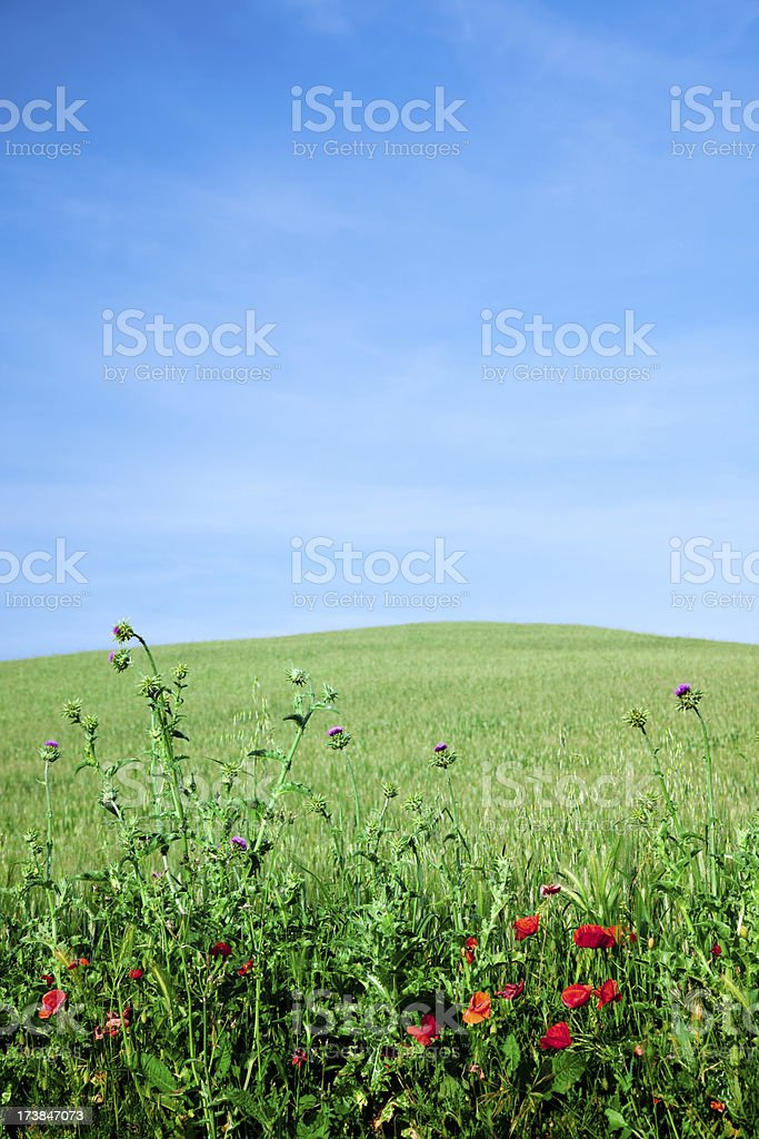 Lovely panorama royalty-free stock photo