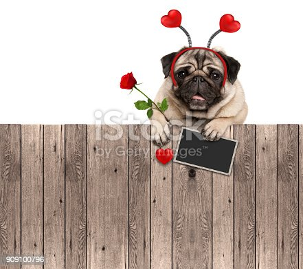 istock lovely pug dog with hearts diadem, blackboard and rose, hanging on wooden fence 909100796