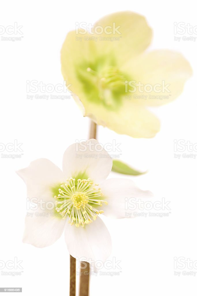 Lovely seasonal flowers royalty-free stock photo