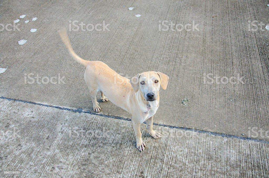 Lovely Stray Dog foto royalty-free