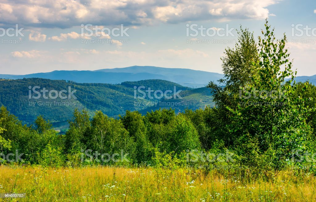lovely summer landscape in mountains - Royalty-free Agricultural Field Stock Photo