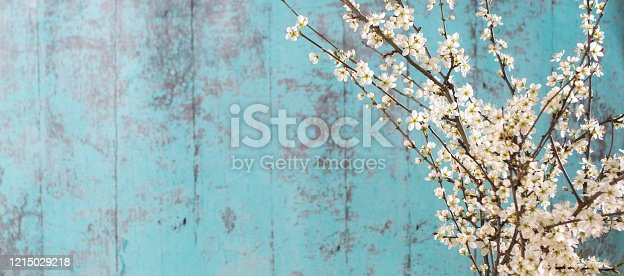 istock Lovely white cherry blooms on the branches. They are blooming before they get the leaves. On the green wooden background 1215029218