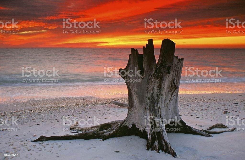Lovers Stump stock photo