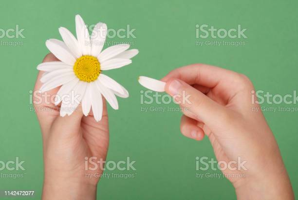 Loves or not loves me plucking off the petals of a camomile picture id1142472077?b=1&k=6&m=1142472077&s=612x612&h=crpigjrd1j3hq3rkiox8izcgyujcuhmugjlffcsy2l4=