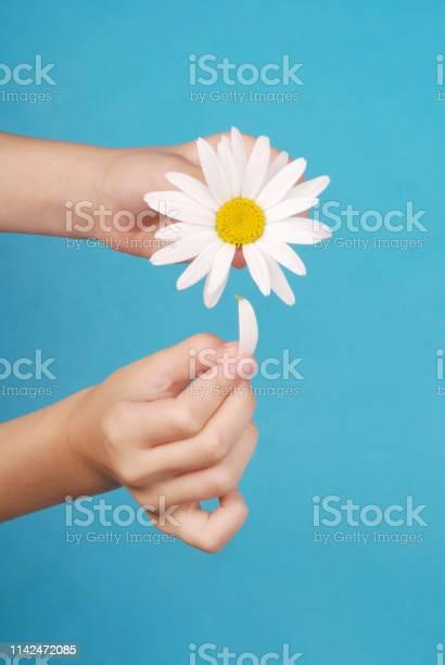 Loves or not loves me plucking off the petals of a camomile picture id1142472085?b=1&k=6&m=1142472085&s=612x612&h=hxd4ffs6ho9j1s4vgphykig63hoe04wstks6djq2eps=