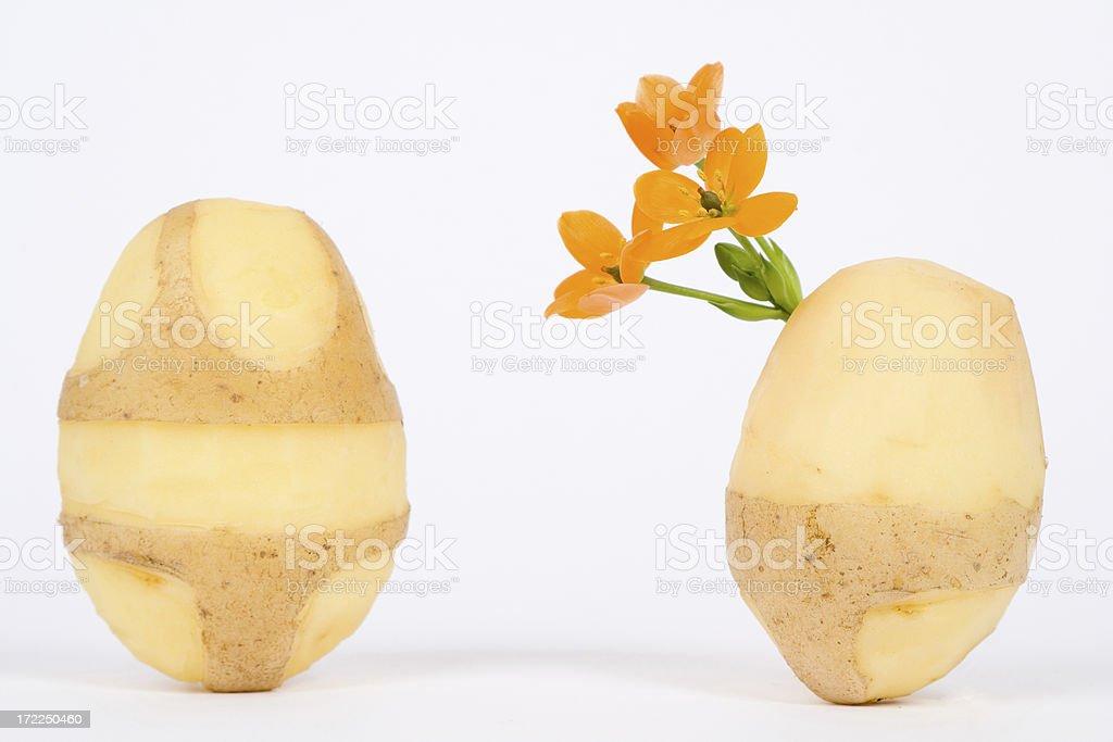 Loving potatoes royalty-free stock photo