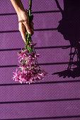 Beautiful spring flowers on purple background
