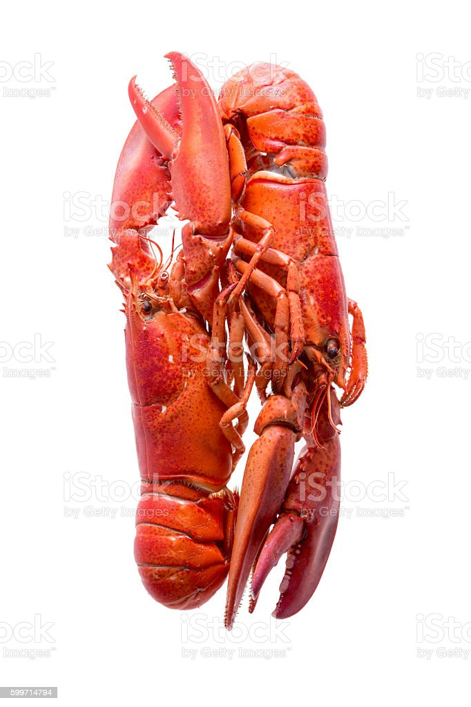 Loving Red Lobsters Isolated on White Background stock photo