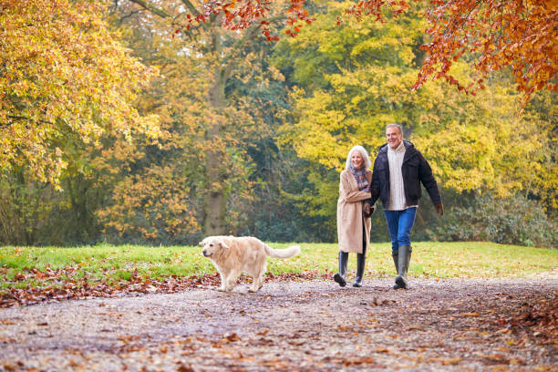 Loving Senior Couple Walking With Pet Golden Retriever Dog Along Autumn Woodland Path Through Trees stock photo