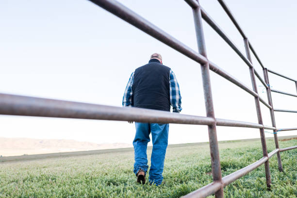 Low angle back view of a rancher walking in the field stock photo