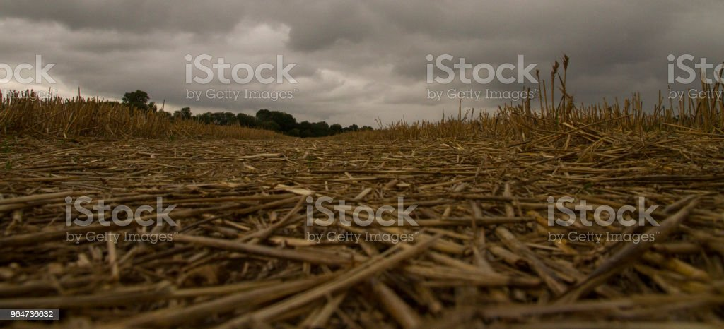 Low angle harvested crop field stock photo