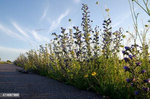 Low angle image of flowers along roadside