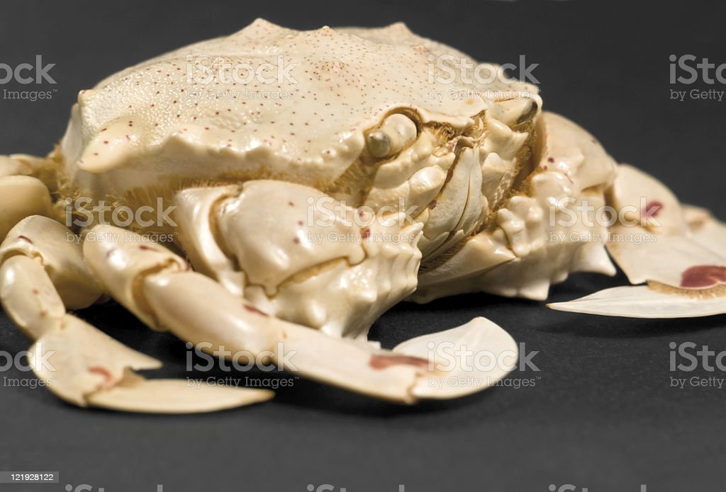 low angle moon crab detail stock photo