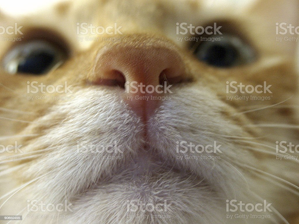Low Angle of a Cat Face royalty-free stock photo