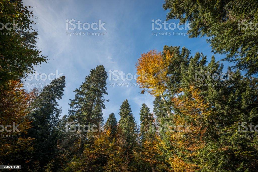 Niedrigen Winkel des herbstlichen Wald – Foto