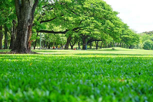 Low Angle Shot: Green Lawns and Trees in Green Park stock photo