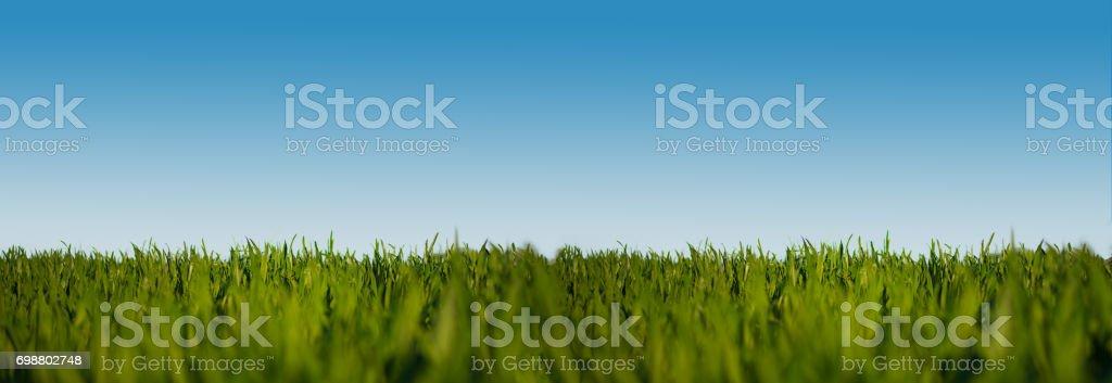 niedrigen Winkel Schuss von üppigen grünen Wiese unter klaren blauen Himmel breiten Hintergrund banner – Foto