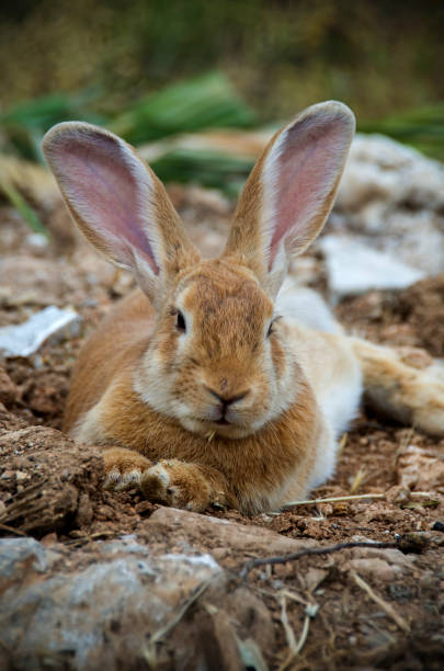 Low angle view of a really pretty and cute bunny rabbit with big ears stock photo