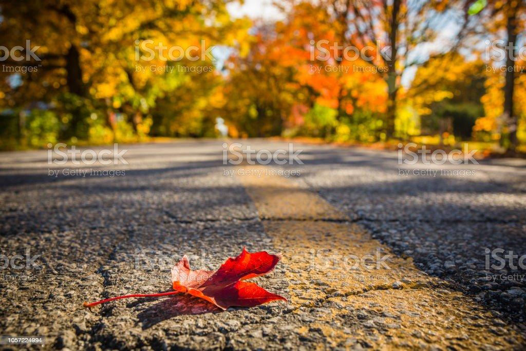 Autumn, multi colored, leaves, canada, beautifull, scenery
