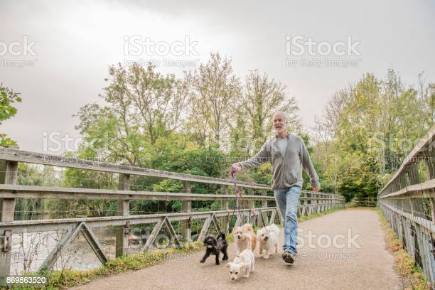 Low angle view of a senior man walking his dogs on a footbridge picture id869863520?b=1&k=6&m=869863520&s=612x612&h=8ti8xz hhvqzlovhm5qntmxuugcrfsz6gejdau7fjwi=