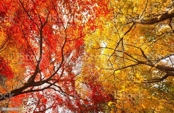 Photo of Low angle view of an autumn tree