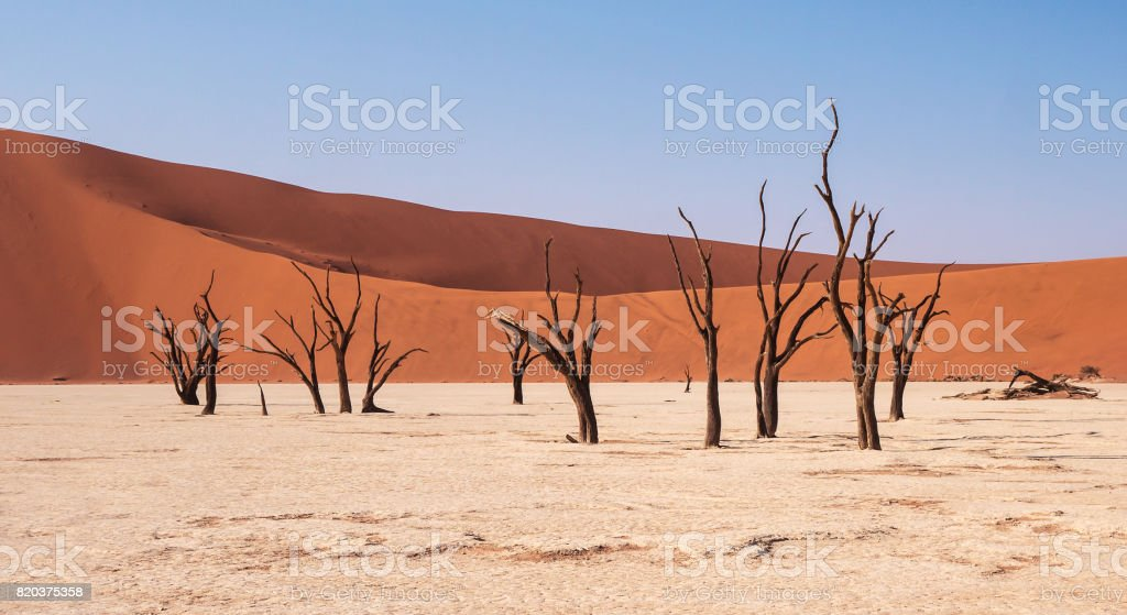 Low angle view of dead trees on white clay pan with large red sand dunes in the background. Deadvlei, Sossusvlei, Namib Desert. stock photo