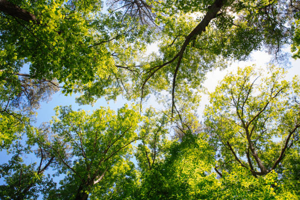 Low angle view of forest in springtime stock photo