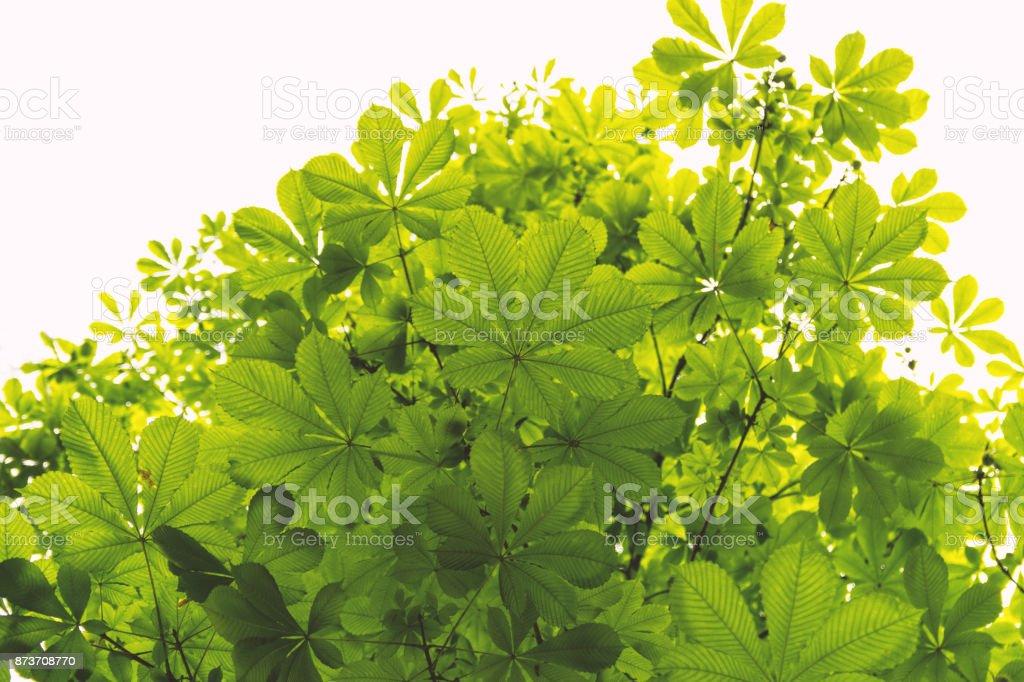 Vista de ángulo bajo de hojas de color verde castaño contra el cielo brillante - foto de stock