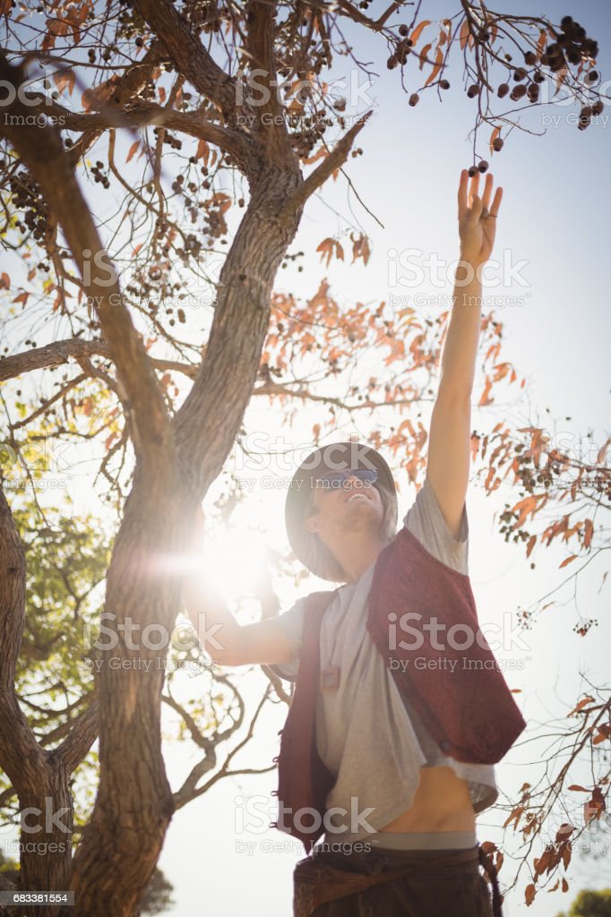 Low angle view of man reaching at fruits hanging on branch stock photo