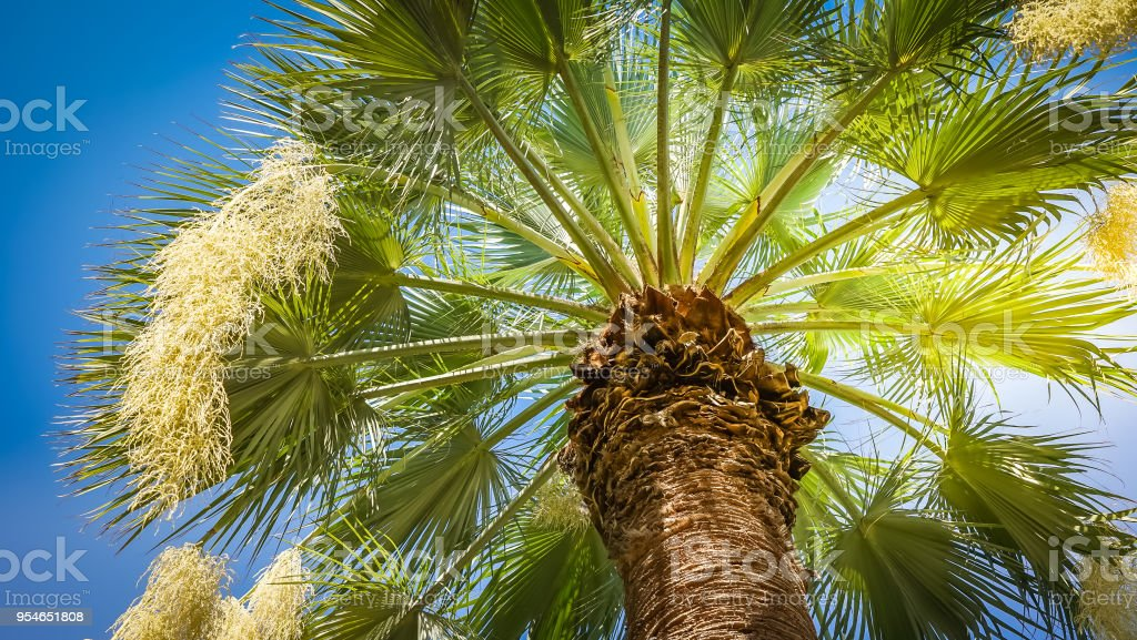 Low angle view of palm tree against blue sky stock photo