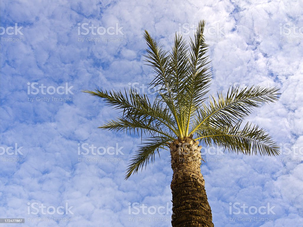 Low Angle View Of Palm Tree And Cloudy Sky stock photo
