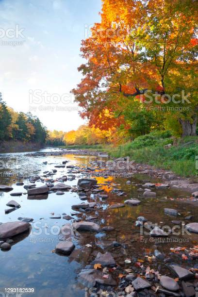 Photo of Low angle view of river in northern Michigan with rocks by trees in fall color