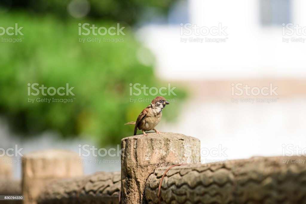 low angle view of Sparrow standing on railing stock photo