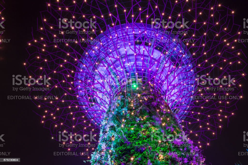 Low angle view of the illuminated Skytree, Gardens by the Bay royalty-free stock photo