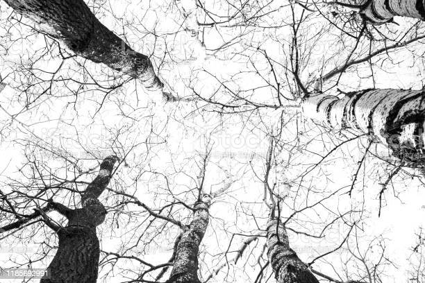 Photo of Low angle view of trees in forest b/w