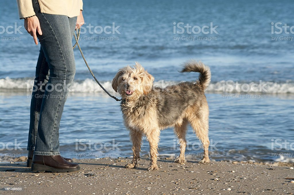 Low angle view of woman walking dog with wet feet stock photo
