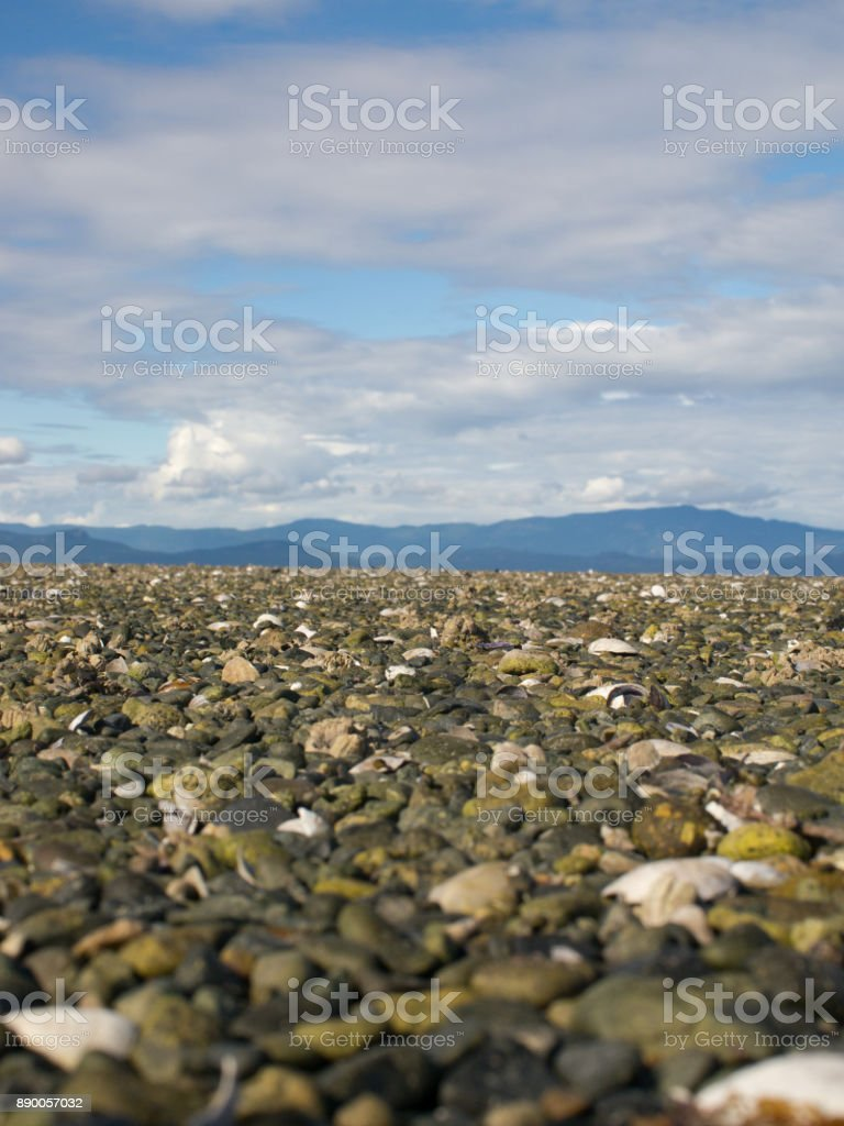 low angle view over rocks and shells at low tide stock photo