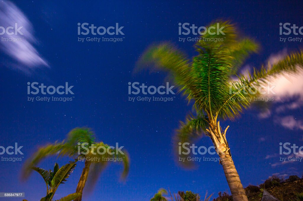 Low angle view palm trees in starry dark night sky stock photo