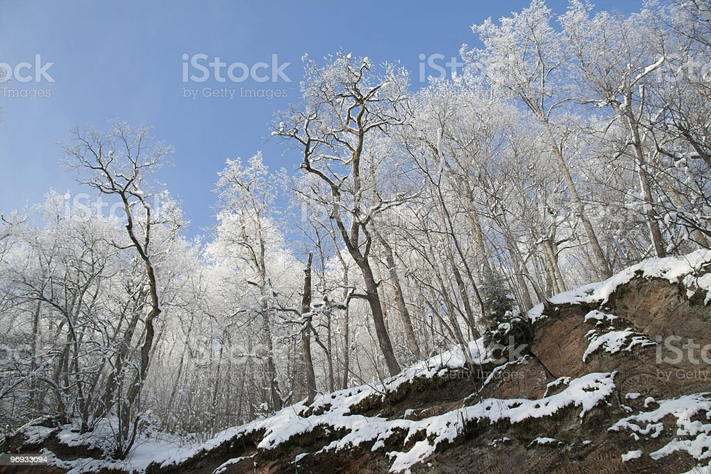 Low angle view to forest cliff royalty-free stock photo