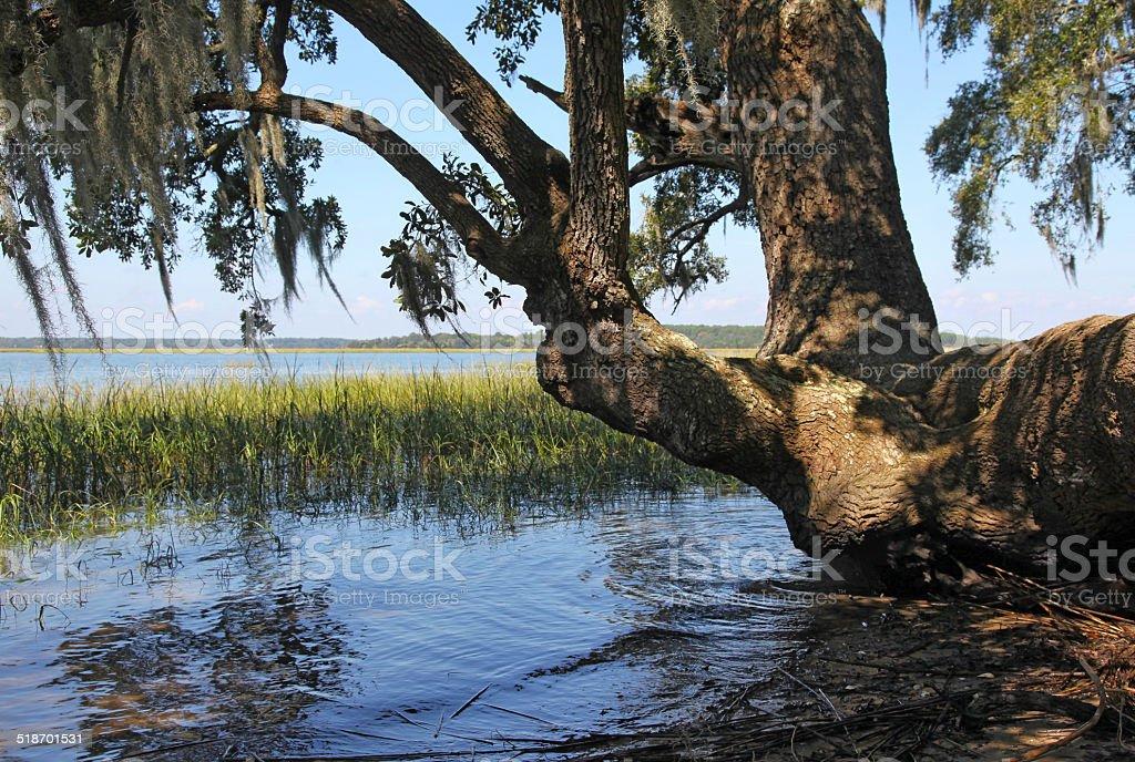 Low Country Marshland stock photo