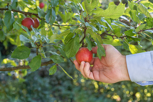 """""""Picking the low hanging fruit"""" is a business metaphor used to communicate  the most easily achieved of a set of tasks, measures, goals, etc.  The concept is also known as """"quick win"""""""