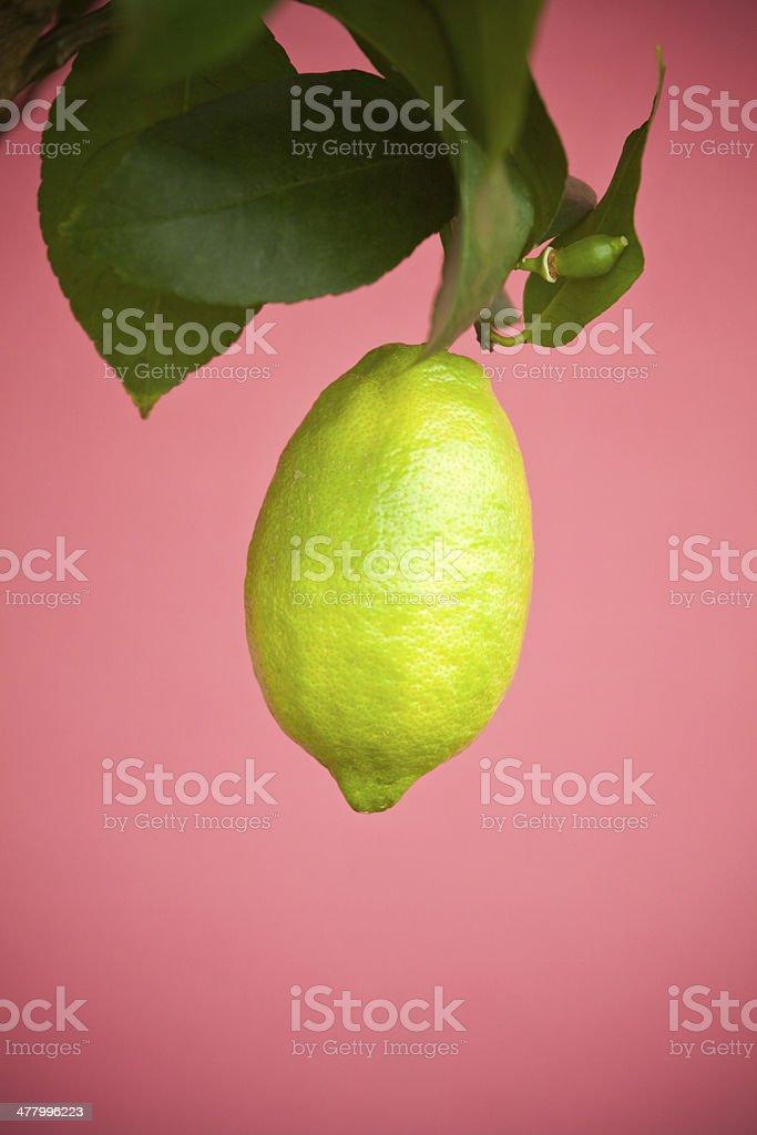 Low Hanging Fruit stock photo