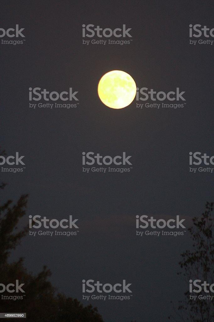 Low hanging moon. stock photo