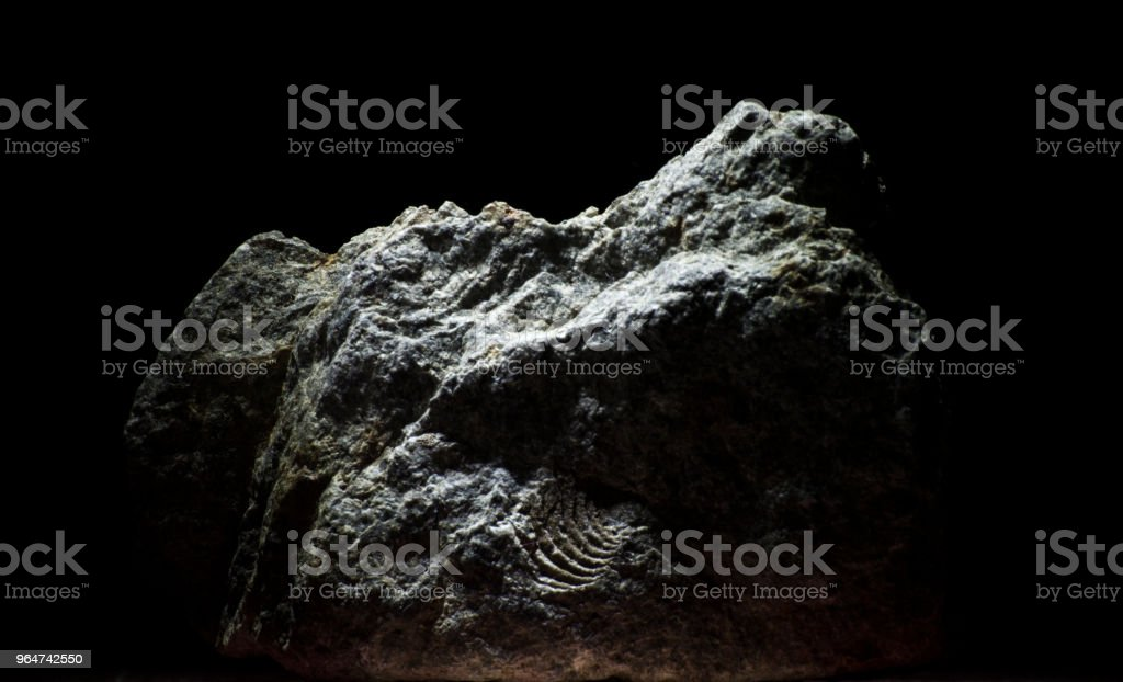 Low key studio shot of rock with fossil stock photo