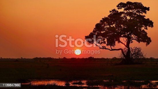 An orange ball of sun setting just above the horizon, where a large tree  and the land are silhouetted in black against the reddish orange sky. A small water pond is in the foreground, reflecting the sky color.