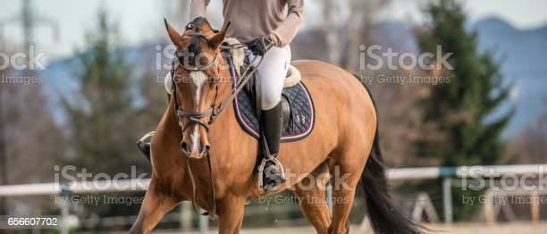 Low section of racehorse picture id656607702?b=1&k=6&m=656607702&s=612x612&h=2c 6tchcabrt8elm6qmqvoez7bta8ilike1ddnxm4he=