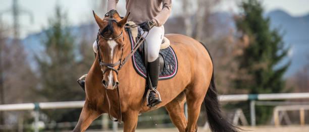 sección baja del caballo de carreras - equitación fotografías e imágenes de stock