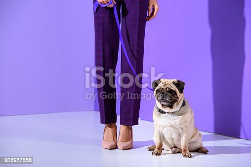 istock low section view of girl posing with pug dog, ultra violet trend 928957858