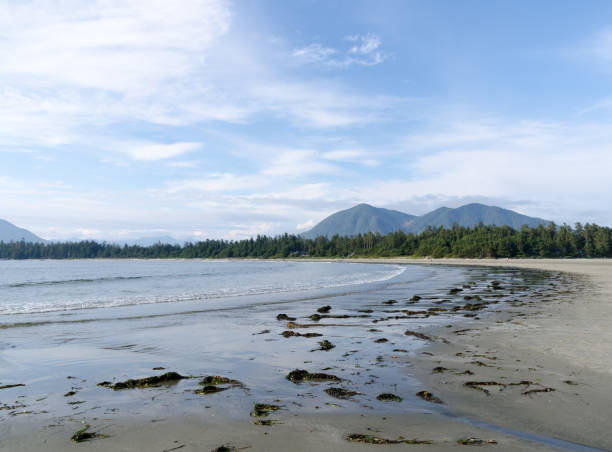 Low tide brought numerous heaps of seaweed on north end of Chesterman beach Tofino, British Columbia stock photo